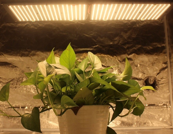Quantum Board LED Grow Lights