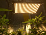 Samsung LED Quantum Board Grow Light 125W with Cannabis Plants