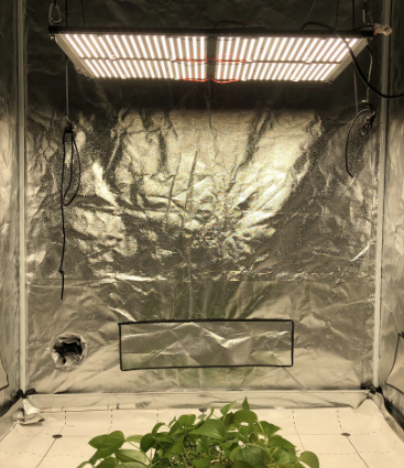 Quantum Board LED Grow Light 480W