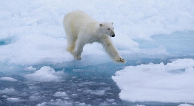 9 Facts About Arctic Sea Ice