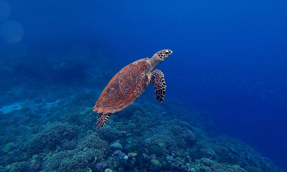 Underwater image of a sea turtle swimming
