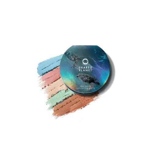 Sea Turtle Highlighting Palette Palette Shared Planet