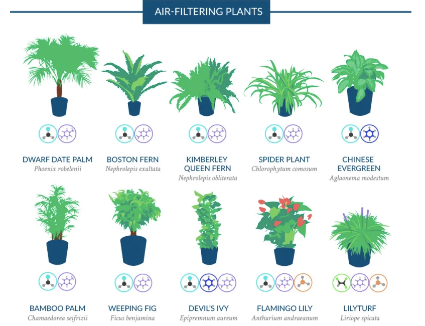 4 Plants that Improve Indoor Air Quality