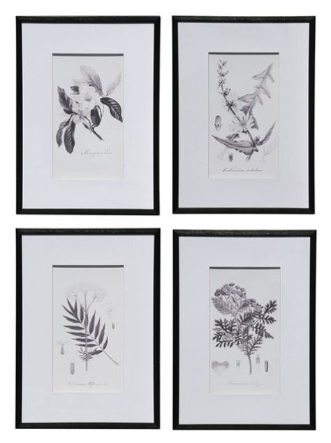 Black & White Botanical Prints