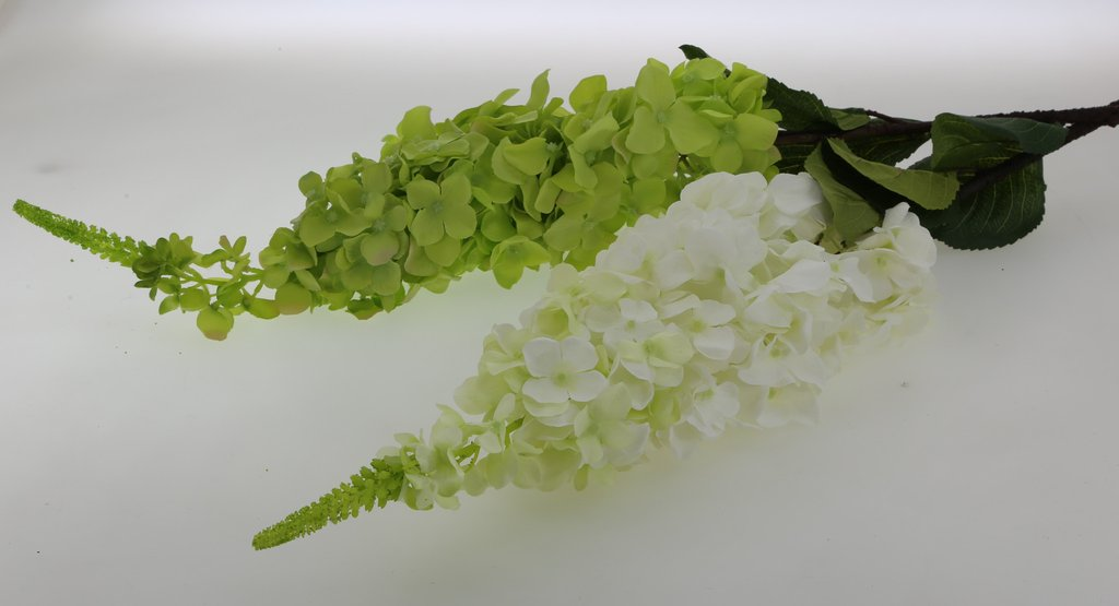 Hydrangea Long Branch Lime