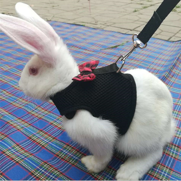 Black Rabbit Leash Vest