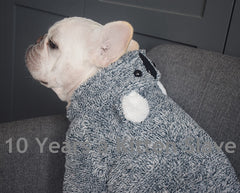 Hoodies for Cats And Small Dogs