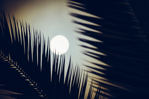 Moonlight. Taken by SF based photographer Joe Keefe Available in L, XL and Grand.