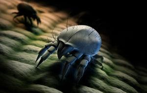 dust mite on baby mattress