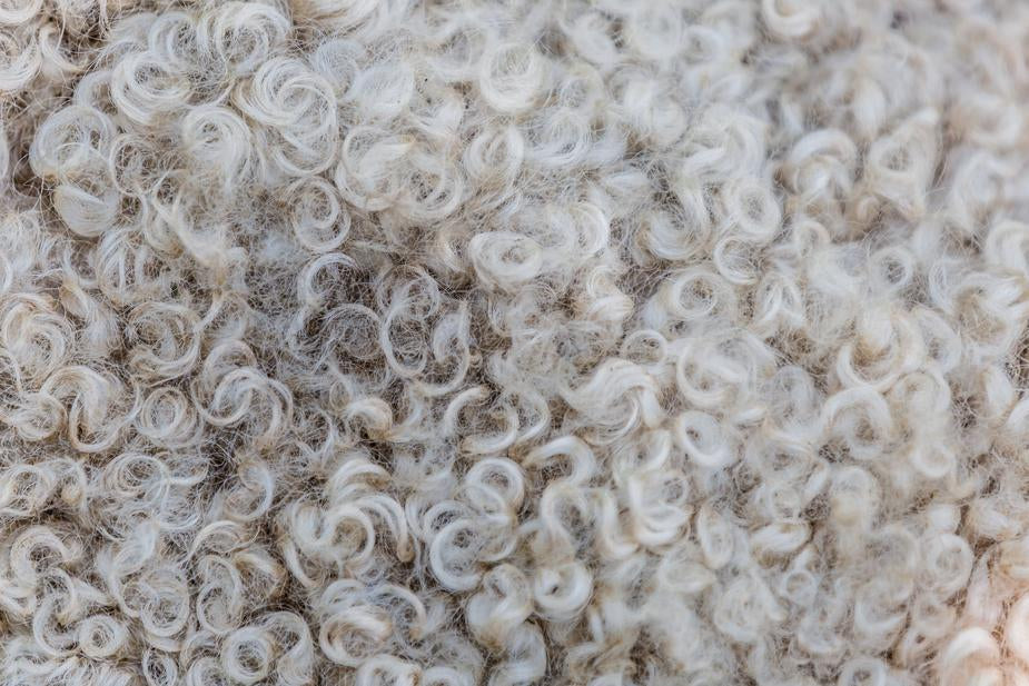 wool in baby mattresses will not reduce risk of asthma and allergies