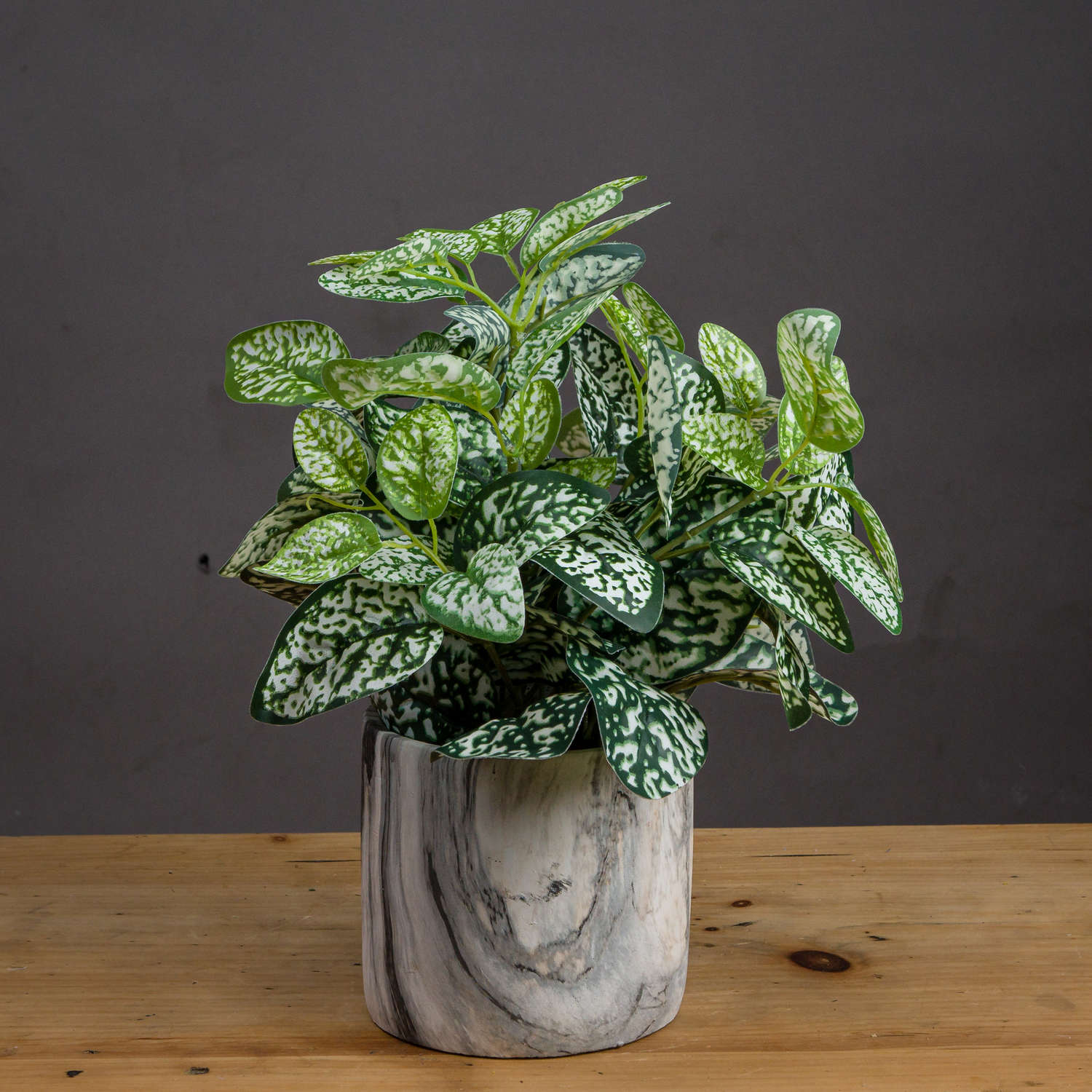 Variegated White And Green Nerve Plant