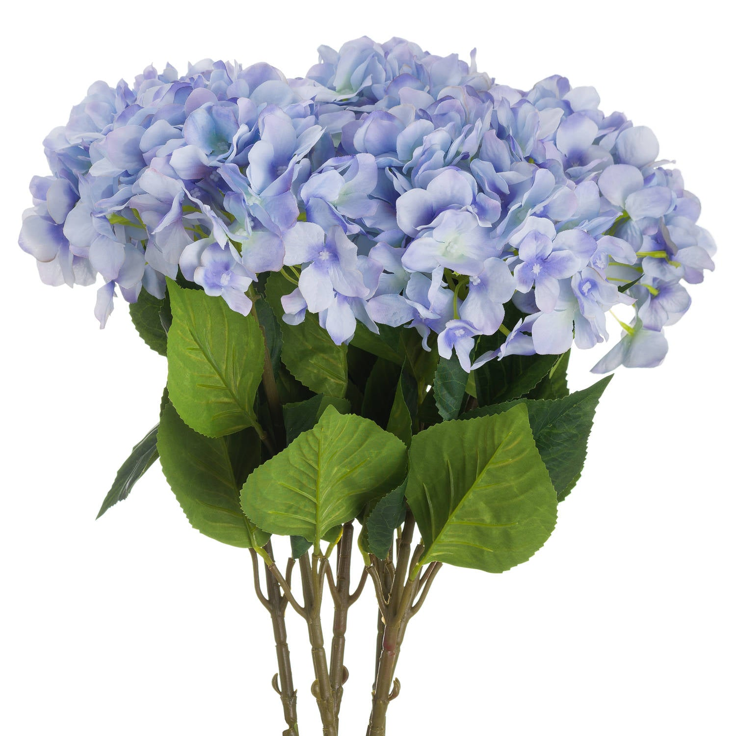 Single Blue Hydrangea