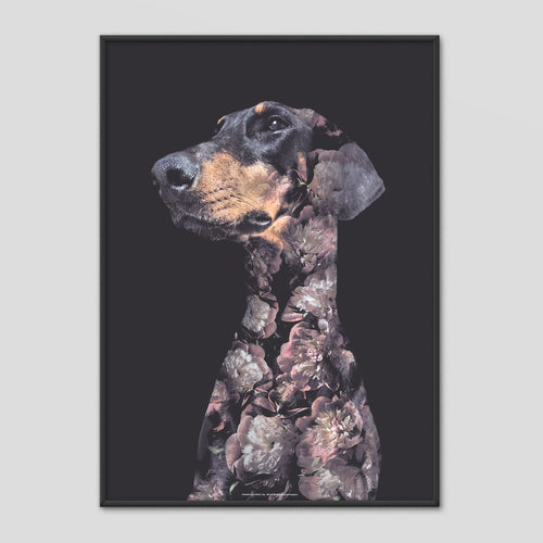 Doberman Dog - Faunascapes Flower Portrait