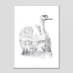 Swan - Faunascapes Pencil Drawing
