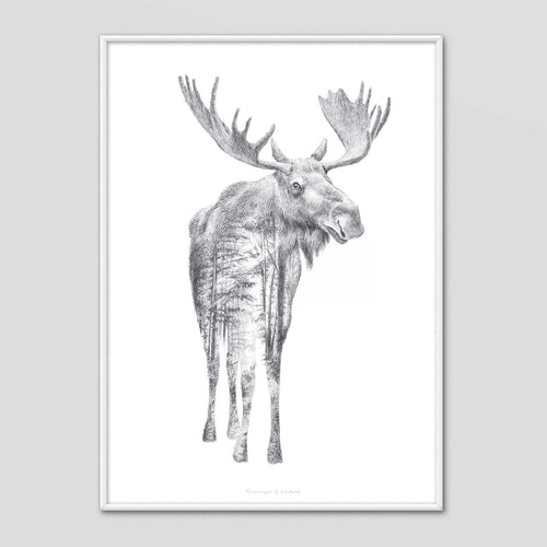 Moose - Faunascapes Pencil Drawing