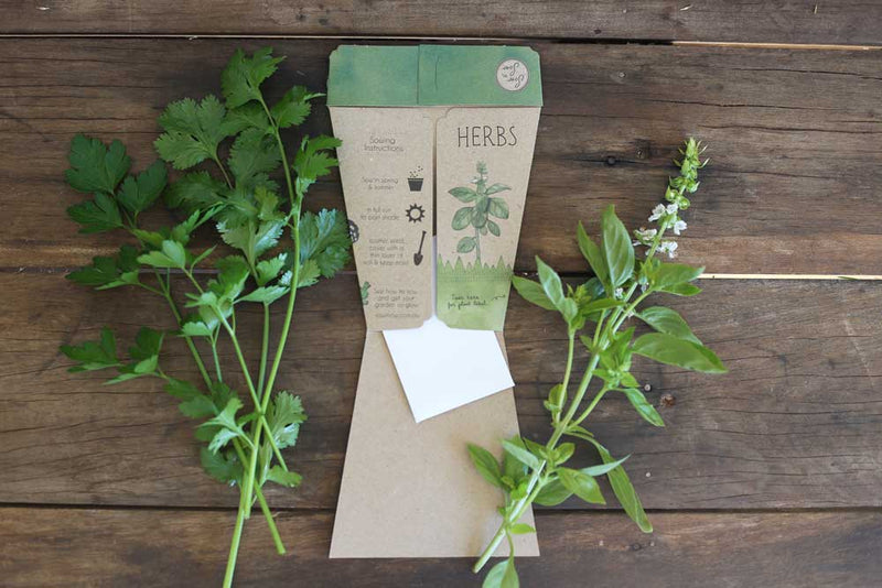 Sow n Sow Gift of Seeds Trio of Herbs x1