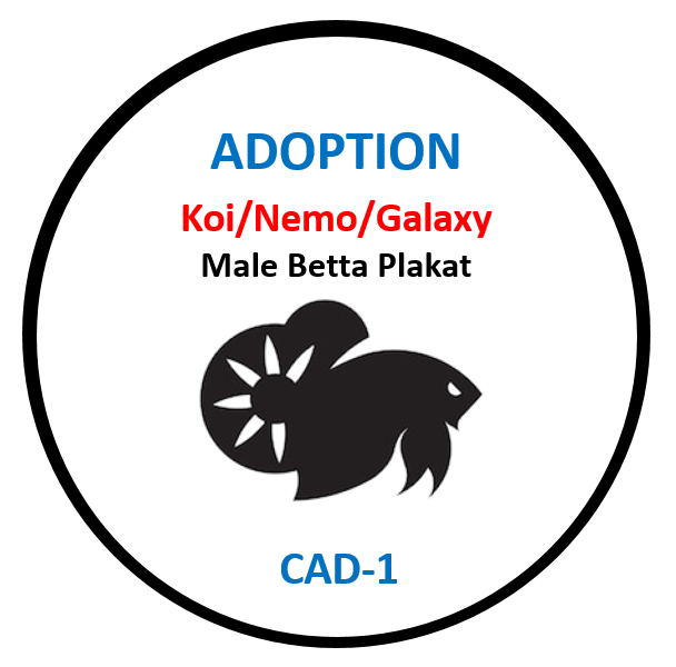 (CAD-1)Betta Adoption Koi, Nemo, Galaxy Male Plakat