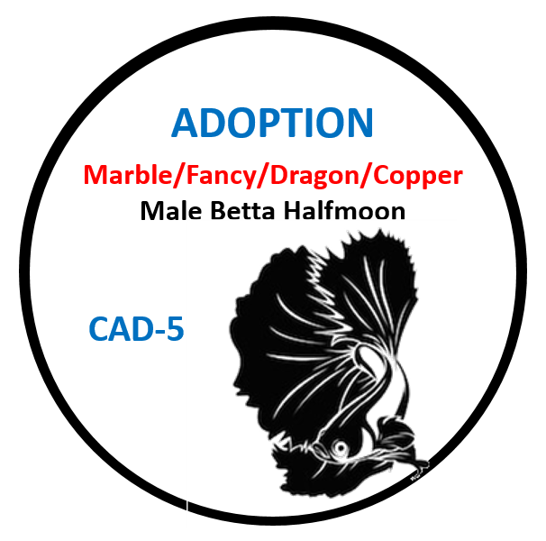 (CAD-5) Betta Adoption Marble Fancy Dragon, Copper Male Halfmoon