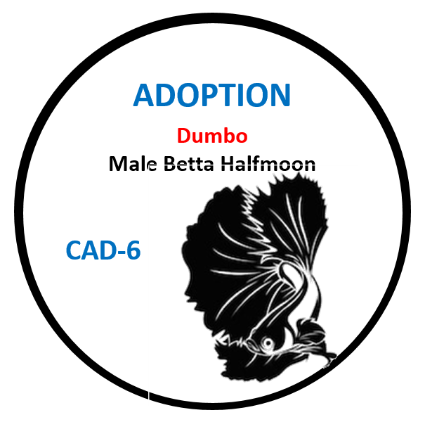 (CAD-6) Betta Adoption Dumbo Male Halfmoon