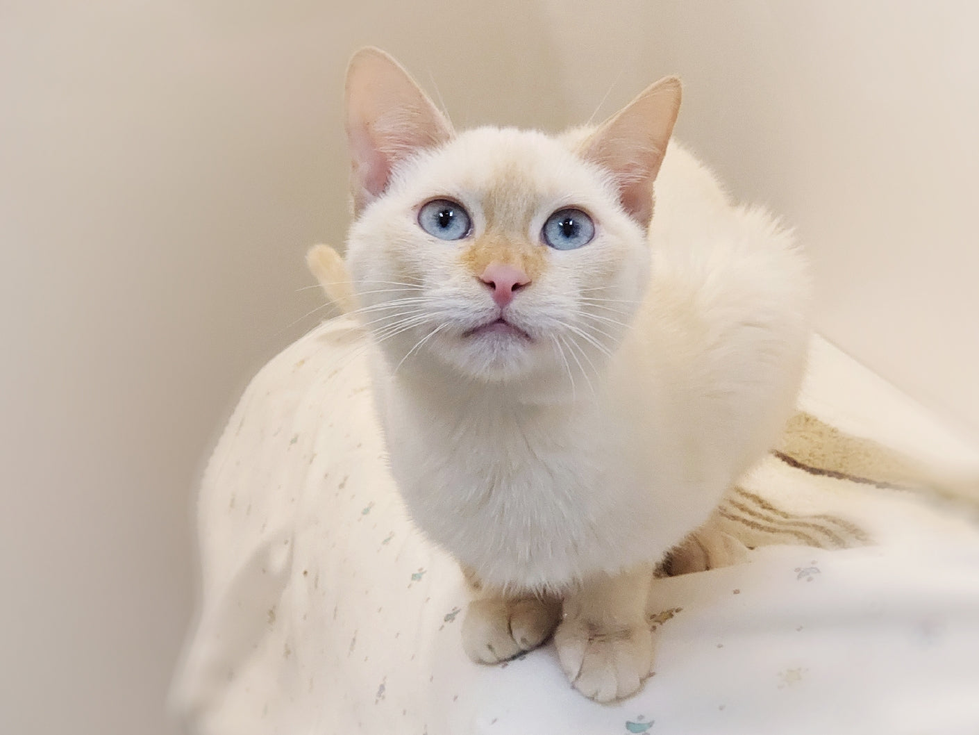 Snowy (Adopted)