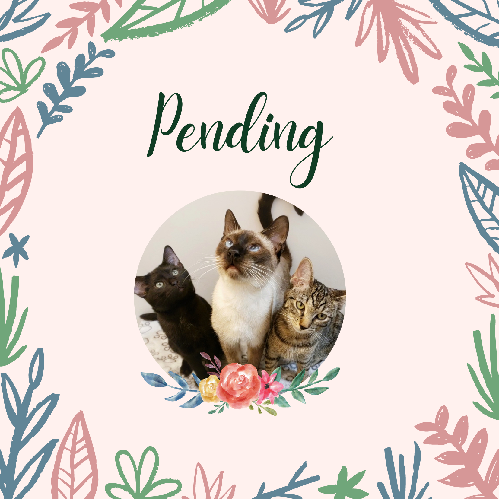 Pending Interview Cats