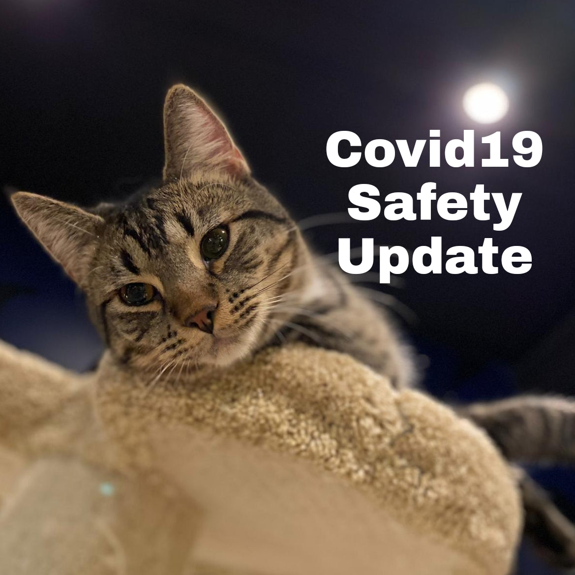 Covid19 Safety Update (November 8th 2020)