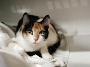 Patches (Adopted)