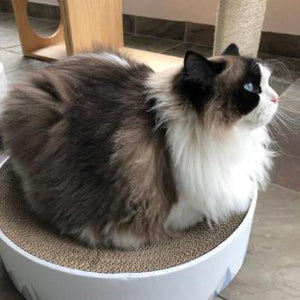 Cat Scratcher - Valley - Catoro Cat Cafe