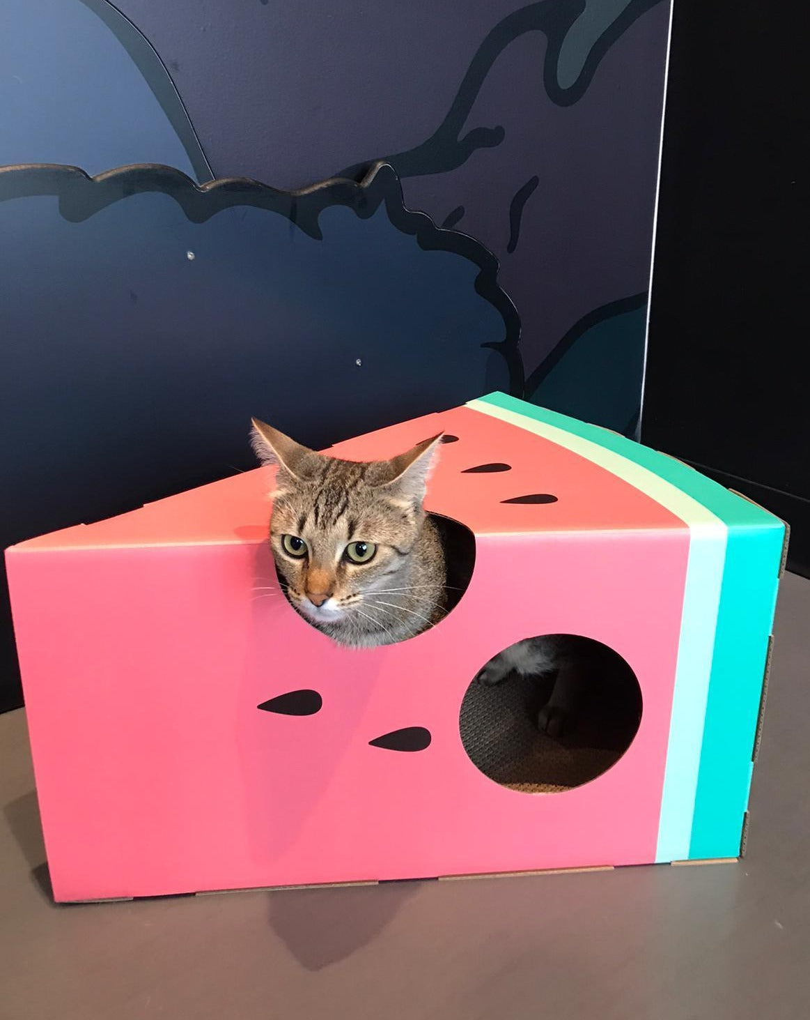 Vetreska Watermelon Cat Scratcher Box - Catoro Cat Cafe