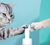 Cature Waterless Paw Cleaning Foam - Catoro Cat Cafe