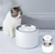 Petkit Eversweet Smart Water Fountain Gen 3.0 - Catoro Cat Cafe