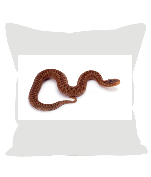 Baby Adder overstuffed cushion. 12