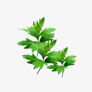 Stop-bleeding herb: Mugwort Leaf