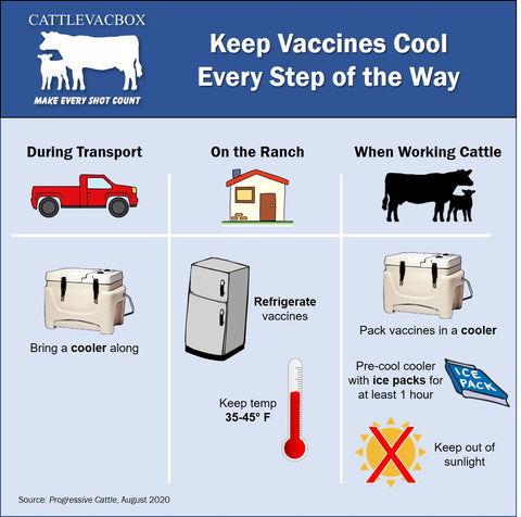 How to keep cattle and livestock vaccines cool every step of the way