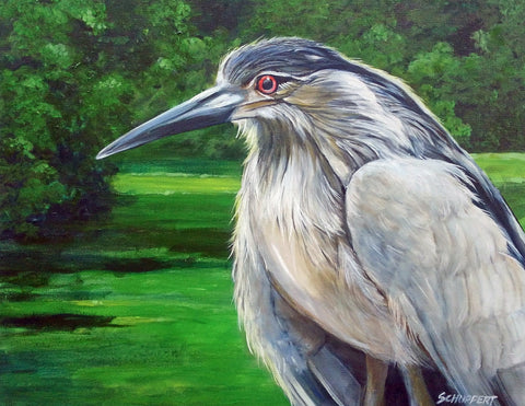 Black Crowned Night Heron: Art and Giclée Print