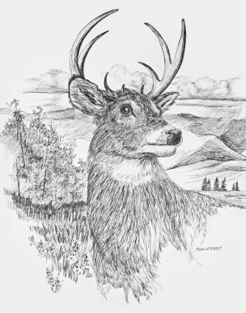 Buck White Tailed Deer: Original Graphite and Charcoal Drawing