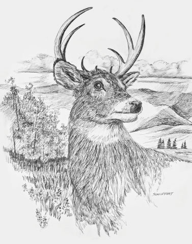 Buck White-tailed Deer: Art Print