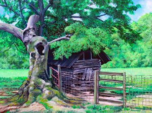 Old Oak Tree and Cotton Shed: Original Fine Art Oil Painting