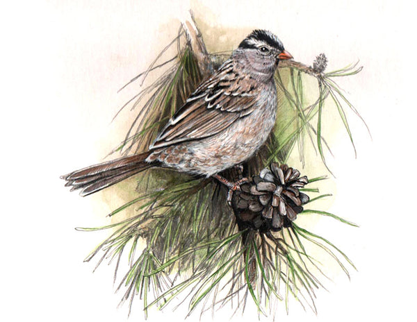 White Crowned Sparrow: Original Fine Art Painting