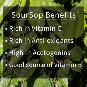 Dried Soursop Leaves Benefits