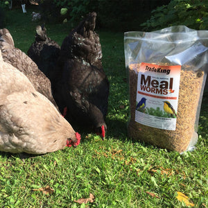5 lb Bulk Dried Mealworms for chickens