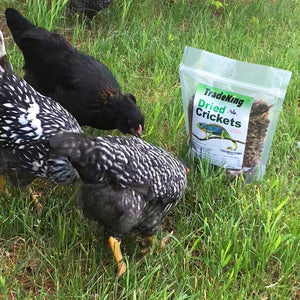 1/2 lb Freeze Dried Crickets for chickens