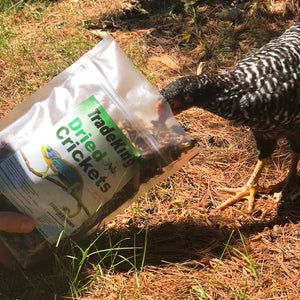 Bulk Dried Crickets for chickens