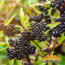 Load image into Gallery viewer, Dried Elderberries - 1 lb - Whole European Elderberry, Responsibly Wild Crafted, Perfect for Tea, Syrups, and More - Sambucas Nigra