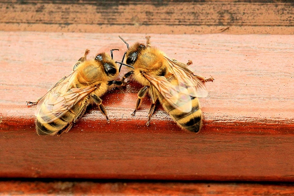 How Bees Are Helping Us in the Fight Against Dementia
