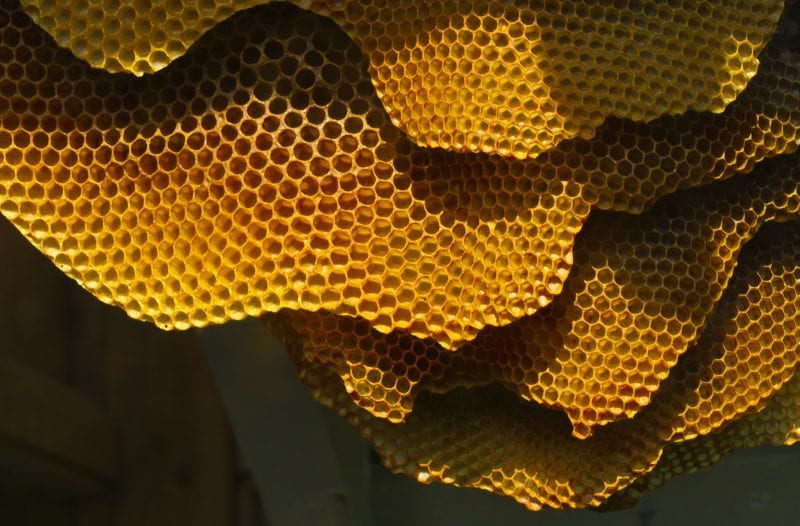What's the Deal with Hexagonal Honeycombs?