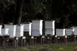 Florence farmer keeps an eye on honey bee health