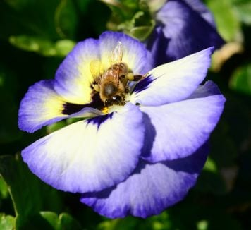 USA- FLOWERS CAN ENDANGER BEES