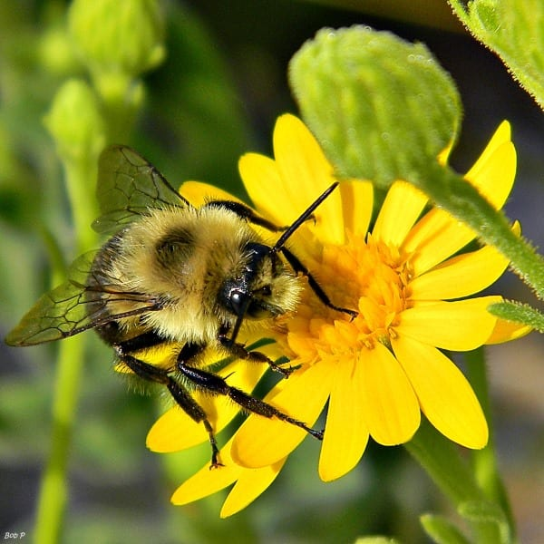 A Guide to Pollinator-friendly Plants