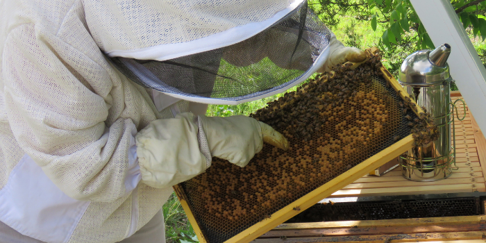 How often should you inspect your beehive?